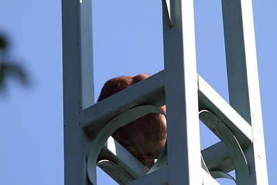 National Zoo - Orangutan - 01138 Art Print
