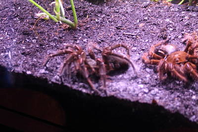 Spider Photograph - National Zoo - Spider - 01132 by DC Photographer