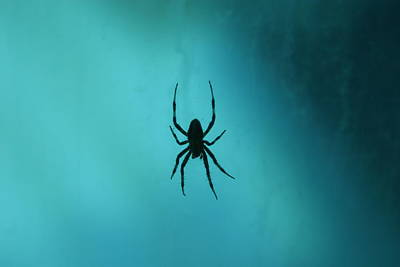 Spider Photograph - National Zoo - Spider - 12121 by DC Photographer