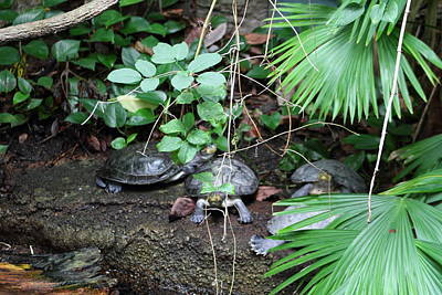 Shell Photograph - National Zoo - Turtle - 01132 by DC Photographer