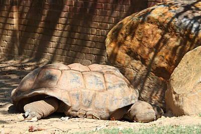 National Zoo - Turtle - 01133 Art Print