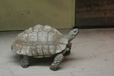 National Zoo - Turtle - 12128 Art Print by DC Photographer