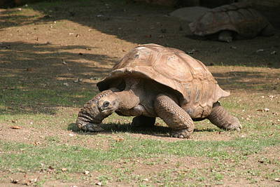 Shell Photograph - National Zoo - Turtle - 12129 by DC Photographer