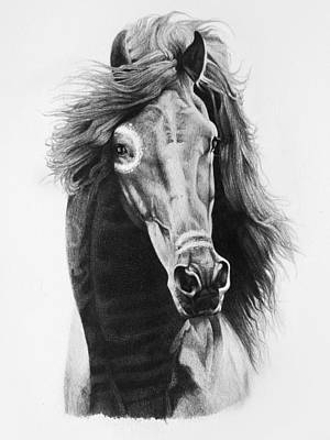 Wild Horses Drawing - Native Horse by Lydia Smith