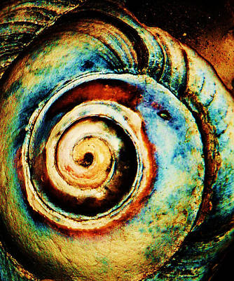 Shell Art Photograph - Native Spiral by Daniele Smith