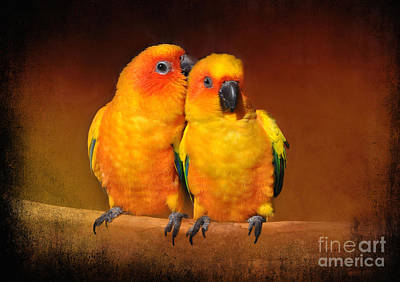Photograph - Natural Affection by Kathy Baccari