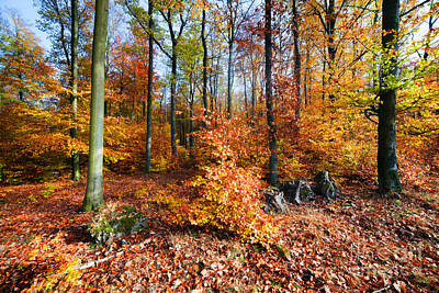 Colored Photograph - Natural Forest In Autumn by Michal Bednarek