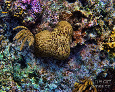Photograph - Natural Heart by Peggy Hughes