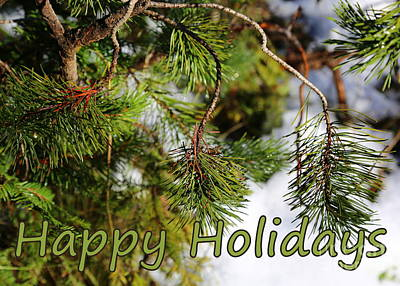 Pine Needles Photograph - Natural Holiday Card by Carol Groenen