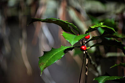 Photograph - Natural Holly Decor by Bill Swartwout