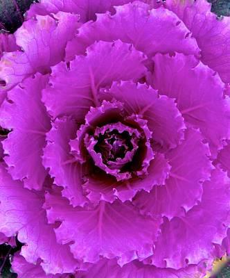 Photograph - Kale Kaleidoscope by Rita Mueller