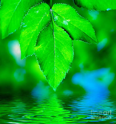 Peace Photograph - Natural Leaves Background by Michal Bednarek