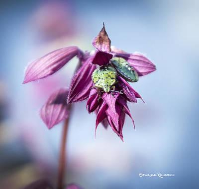 Photograph - Natural Bug Life by Stwayne Keubrick