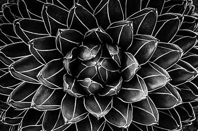 Closeup Wall Art - Photograph - Natural Math by Monica Valentina Patrascoiu