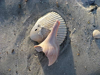 Photograph - Natural Shell Art by Ellen Meakin