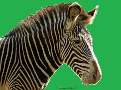 Animal Painting - Natural Zebra by Bruce Nutting