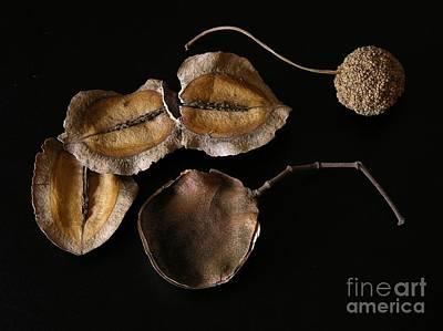 A Hand Mirror Photograph - Naturaleza by Andrey Kuznetsov