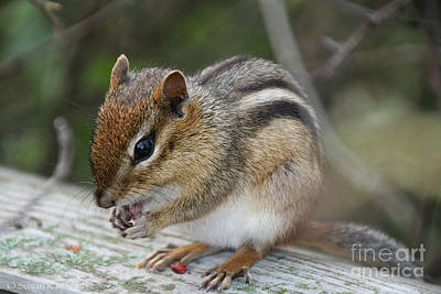 Photograph - Naturally Cute by Susan Herber