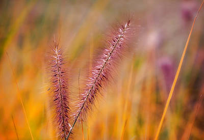 Tranquil Photograph - Nature Abstract Colorful Meadow by Modern Art Prints