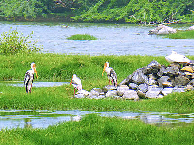 Water Photograph - Nature And Birds by Girish J