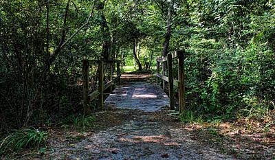 Photograph - Nature Bridge by Judy Vincent