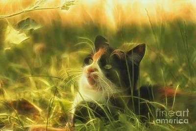 Photograph - Nature Cat by Jutta Maria Pusl