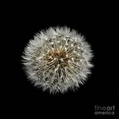 Photograph - Nature Clock by Liz  Alderdice