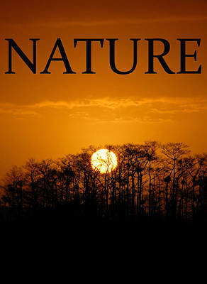 Photograph - Nature by David Lee Thompson