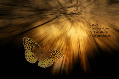 Nature Does Not Hurry Follow The Light Art Print
