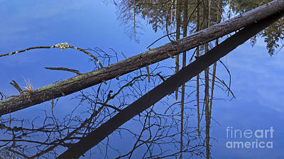 Photograph - Nature Fallen Tree Reflection In Water by Valerie Garner
