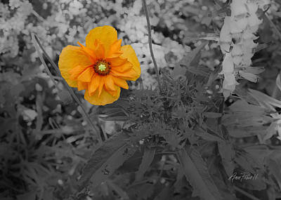 Photograph - nature - flower -Yellow Beauty  by Ann Powell
