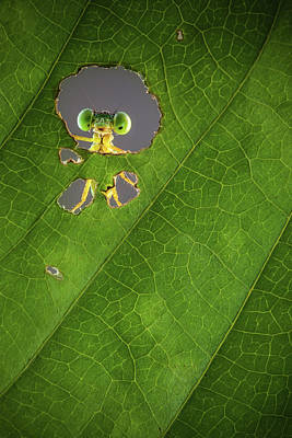 Bugs Photograph - Nature Frame by Wilianto