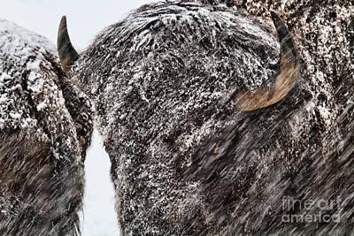 Photograph - Winter's Fury by Jim Garrison