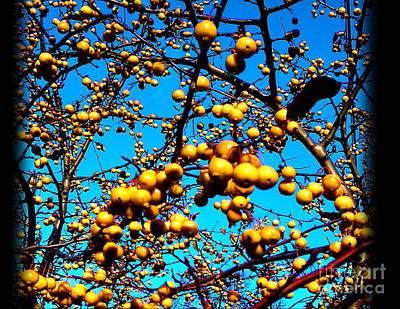 Zeni Shariff Photograph - Nature In Bloom  by Zeni Shariff