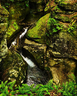 Photograph - Nature In The Raw by Deena Stoddard