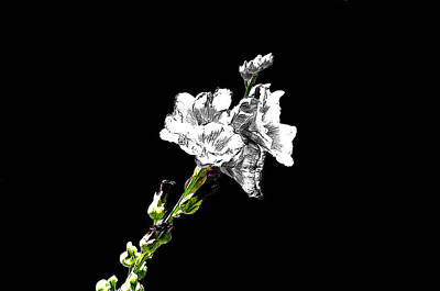 Photograph - Nature In Whitness by Manjot Singh Sachdeva