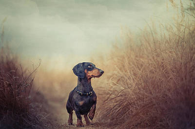 Cute Dog Wall Art - Photograph - Nature Is Calling And I Must Go.. by Heike Willers
