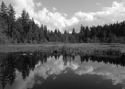 Photograph - Nature Mirrored by Brian Chase