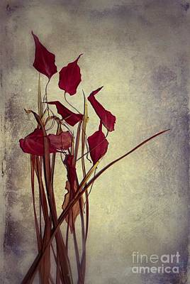 Photograph - Nature Morte Du Moment  01 - Pr03 by Variance Collections