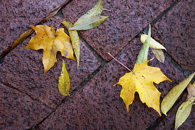 Photograph - nature - photograph Autumn Rain on Fallen Leaves  by Ann Powell