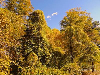 Photograph - Nature Show by John Potts