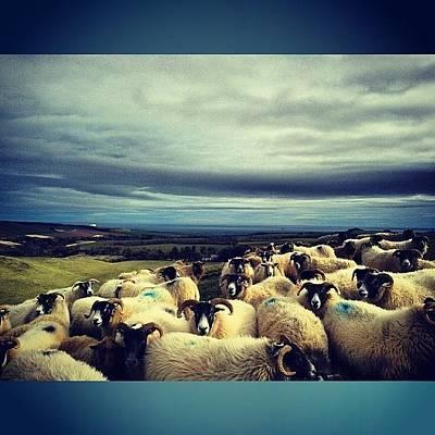 Sheep Photograph - #nature #tagsforlikes #sky #sun by Jen Mac