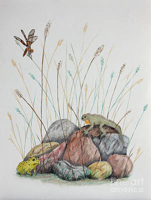 Drawing - Nature by Terri Mills