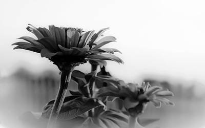 Photograph - Nature Through Black And White by Charles Beeler