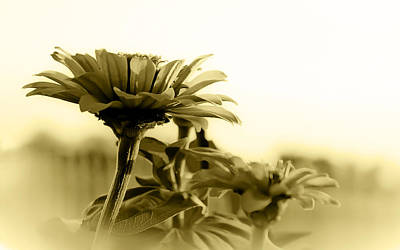 Photograph - Nature Through Sepia by Charles Beeler