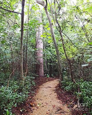 Photograph - Nature Walk Oakley Plantation Louisiana by Lizi Beard-Ward