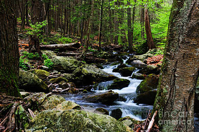 Budda Photograph - Nature Walk by Paul Ward