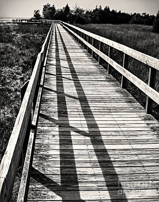Photograph - Nature Walk by Vicki DeVico