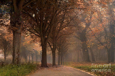 Nature Woodlands Autumn Fall Landscape Trees Art Print by Kathy Fornal