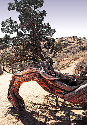Tree Roots Photograph - Nature's Abstract by Linda  Parker
